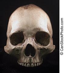 fondo, nero, cranio umano