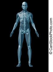 fondo, nero, scheletro, umano