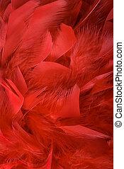 fondo., plumas, rojo
