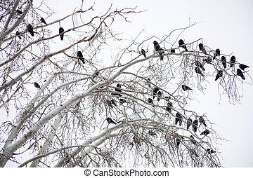 fondo, ramo, corvi, albero