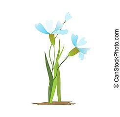 fondo., ramo, vector, primavera, aislado, flores blancas, azul