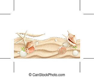 fondo, seashells