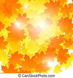 fondo, su, autunno, tema, foglie acero, falling., vettore, illustr