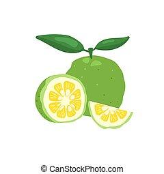 fondo., vector, japonés, yuzu, ilustración, cidra, aislado, fruta, blanco, verde