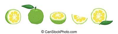 fondo., vector, japonés, yuzu, ilustración, cidra, aislado, fruta, conjunto, blanco, verde