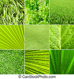 fondo verde, naturaleza