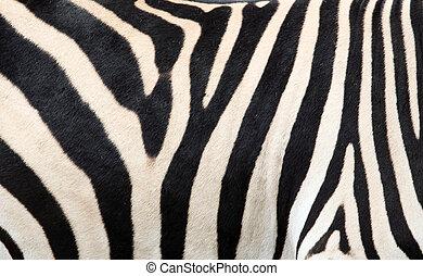 fondo, zebra, struttura, pelle