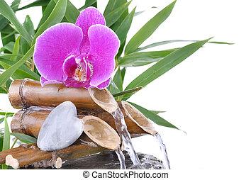 fontaine, caillou, forme coeur, orchidée