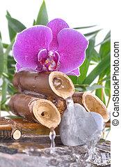 fontijn, romantische, orchidee