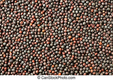 food background of dried canola seeds, top view