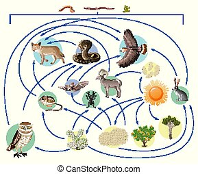 Food chain describes who eats whom in the wild on white background illustration