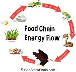 Food chain energy flow diagram illustration