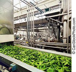 food industry - preparation of frozen spinach
