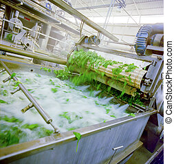 FOOD INDUSTRY - WASHING SPINACH