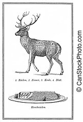 Food, old deer chart