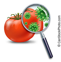 Food safety and inspection symbol represented by a magnifying glass looking closely at a virus bacterial infection on a tomato representing the dangers of produce contamination and the health concerns for human consumption.
