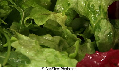 Food, salad, lettuce, arugula