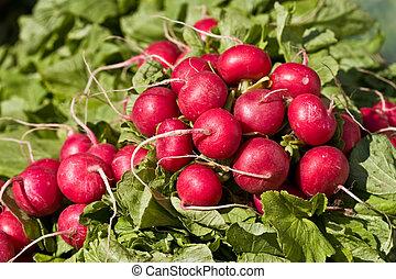 radish - food series: freshly grown spring red radish