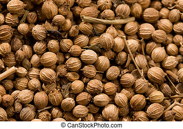 food series: macro picture of coriander, background