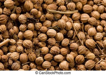 coriander - food series: macro picture of coriander,...