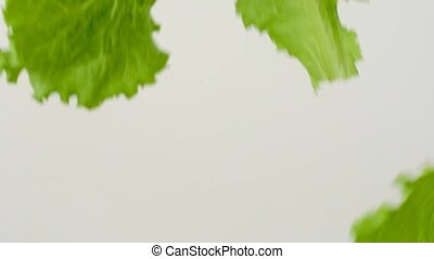 Food shooting of fresh juicy lettuce leaves flying on white...