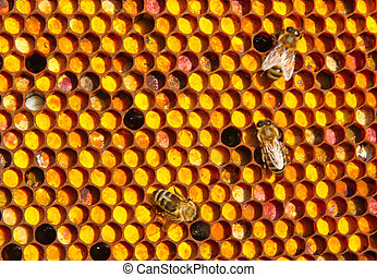 Farine collected by bees, placed by them in honeycombs. All of it is a meal for young bees