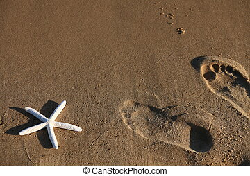 Foot and starfish prints on a sandy beach