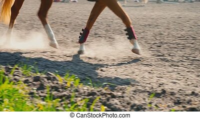 Foot of horse running on the sand at the training area, close-up of legs of stallion galloping on the ground