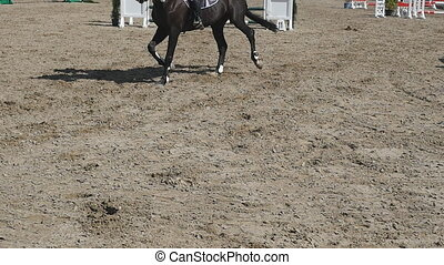Foot of horse running on the sand. Close up of legs of...