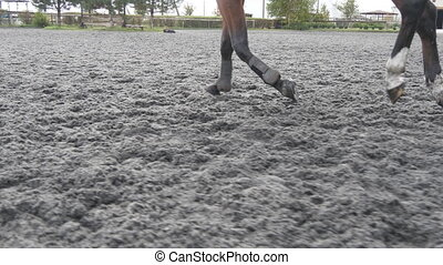Foot of horse running on the sand. Close up of legs...