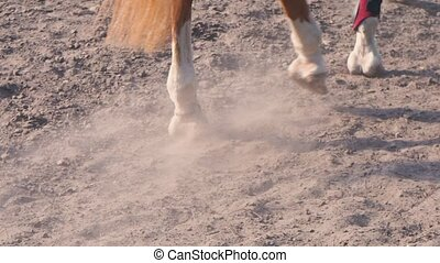 Foot of horse walking along the sand at the training area, close-up of horse legs on the ground, slow motion