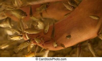 foot peeling fish close-up FULL HD