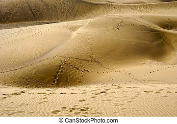 Foot prints in sand - Many foot prints in sand dunes
