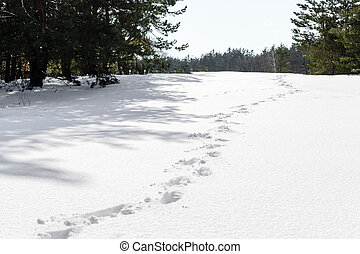 Foot prints in the snow shown in forest. winter background