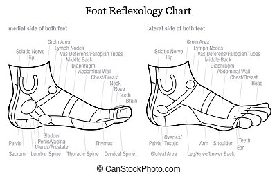 Foot reflexology chart - GERMAN
