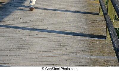 foot walk bridge people