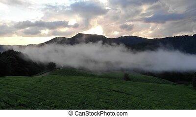 footage., épique, nuages, inspirationnel, thé, sur, flotteur, magnifique, contre, surprenant, bourdon, plantations, brume, toile de fond, sunset.