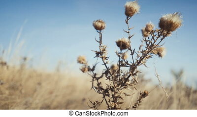 closeup dry grass nature background - Footage closeup dry...