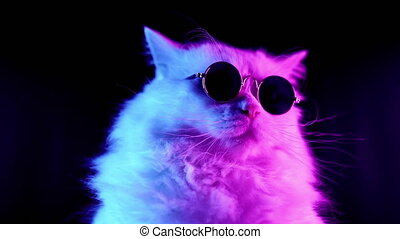 footage., fason, luksusowy, futrzany, neon, kot, koteczek,...
