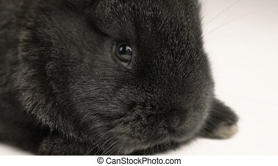 little rabbit or bunny close up