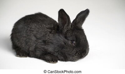 rabbit or bunny on white background - footage little rabbit...