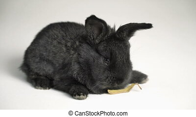 rabbit or bunny on white background