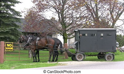 horse and buggy - footage of amish/mennonite horse and buggy
