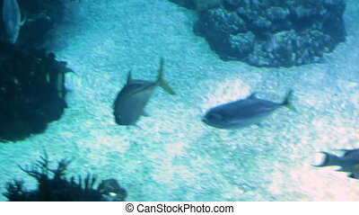 Footage of fishes swimming in big public aquarium - Video of...