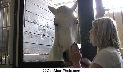 white horse - footage of woman petting white horse in stall