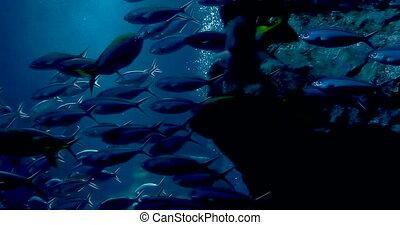 footage tropical reef fish and aquatic plants in aquarium