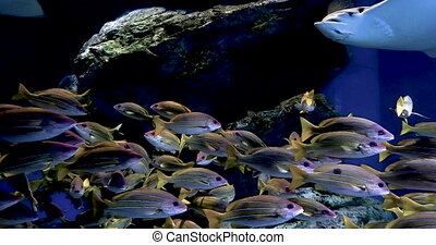 footage tropical reef fish, batoidea and aquatic plants in...