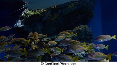 footage tropical reef fish, batoidea and aquatic plants in...