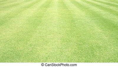 Football field green grass