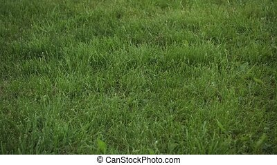 Football Rolling across Frame on Grassy Field